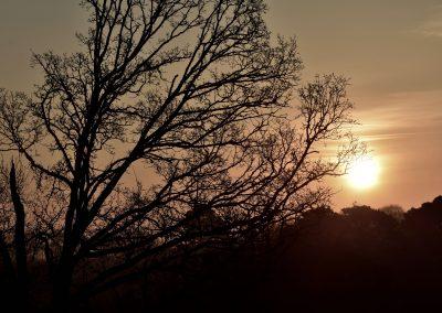 Début de chantier au levé du jour sur un chêne | Arbiosa élagage et paysage