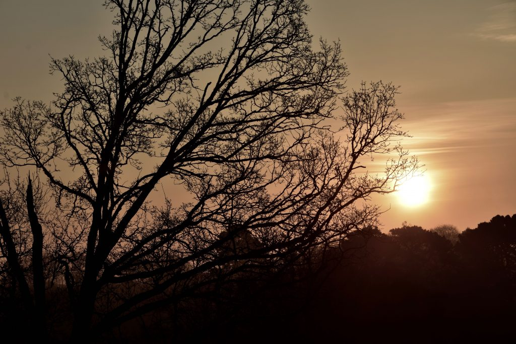 Levé de soleil sur un chêne proche de Machecoul