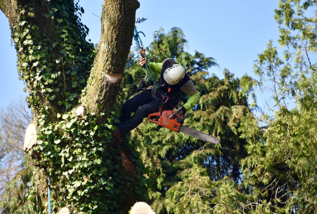 Démontage et abattage difficile d'une grand arbre à La chevrolière