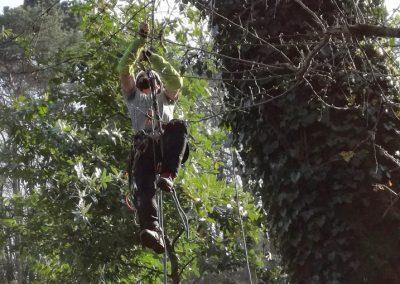 L'arborante grimpeur accède à l'arbre par la corde d'accès à Machecoul.