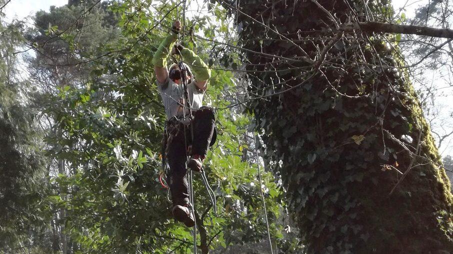 Accès à la cime de l'arbre | Arbiosa élagage et paysage