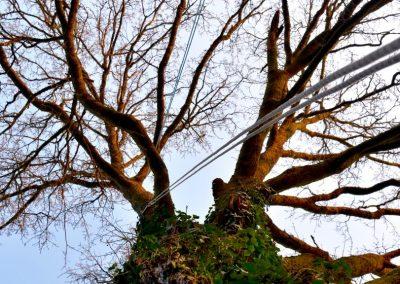 Cordes d'acces et de travail | Arbiosa élagage et paysage
