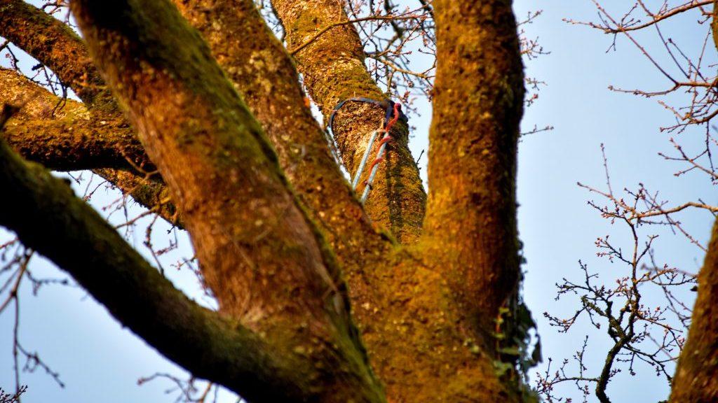 Fausse fourche | Arbiosa élagage et paysage