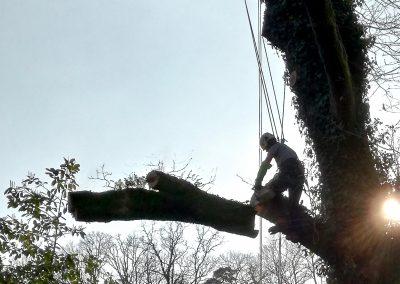 Démontage d'un chêne avant abattage à Saint Philbert de grand lieu