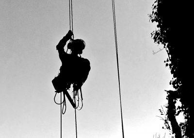 L'arboriste grimpeur effectue un diagnostique phytosanitaire à La Limouzinière.