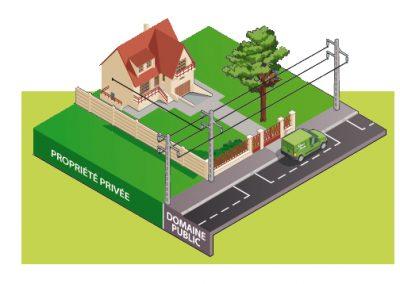L'arbre est à proximité du câble qui alimente la propriété | Arbiosa élagage et paysage