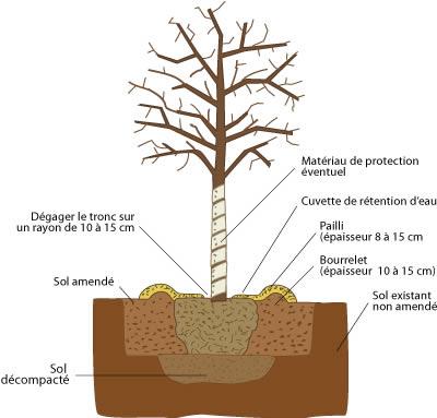 La société Arbiosa vous accompagne lors de la plantation de vos arbres.
