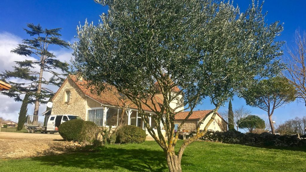 Taille de formation d'un olivier | Arbiosa élagage et paysage