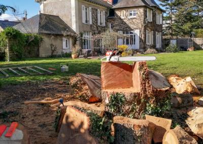Abattage d'un grand chêne par démontage avec rétention à Nantes.