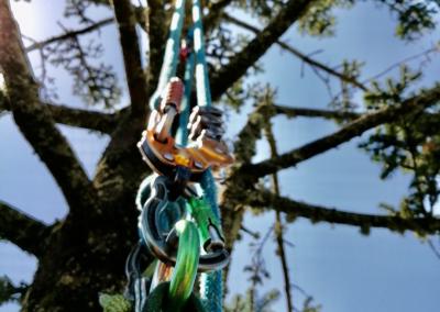 Les élagueurs grimpes sur corde pour tailler les arbres.