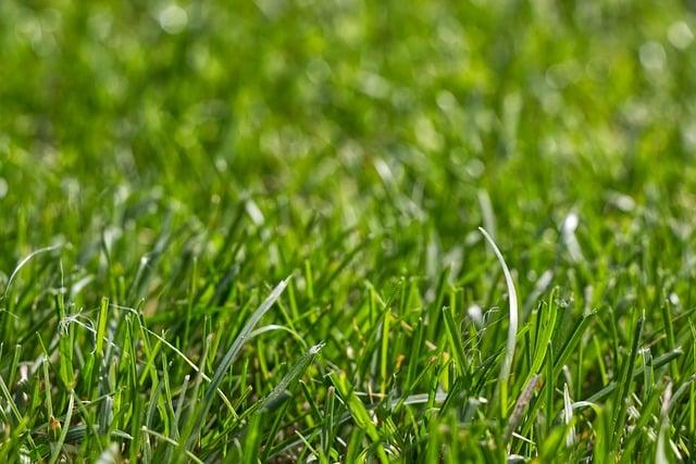 Nous réalisons la tonte de vos pelouse avec le service à la personne.